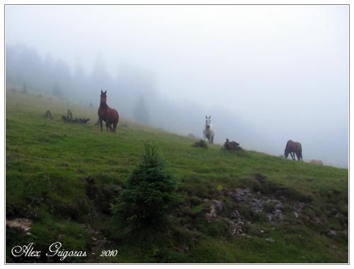 /Bihor/apuseni_353.jpg