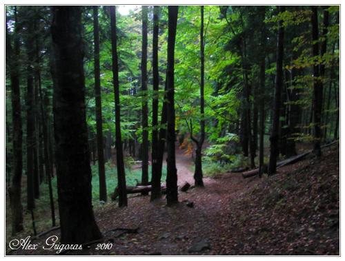 /Ceahlau_9_10_2010/ceahlau_033.jpg