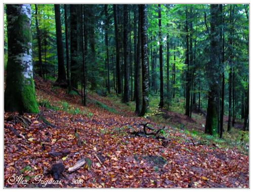 /Ceahlau_9_10_2010/ceahlau_346.jpg