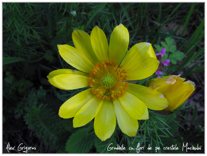 /Macin_23_04_2010/23_creasta_macin_244.jpg