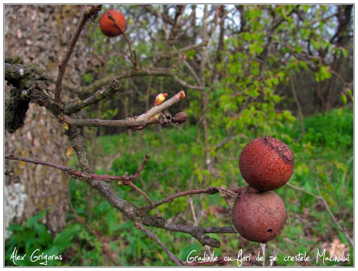 /Macin_23_04_2010/28_creasta_macin_271.jpg