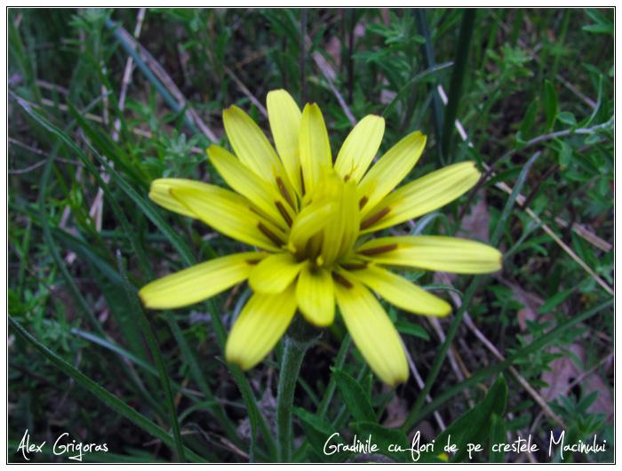 /Macin_23_04_2010/35_creasta_macin_337.jpg