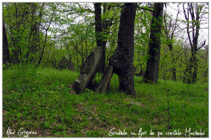 /Macin_23_04_2010/66_creasta_macin_839.jpg