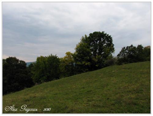 /Persani_2010/muntii_persani_351.jpg