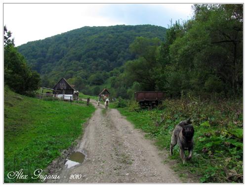 /Persani_2010/muntii_persani_497.jpg