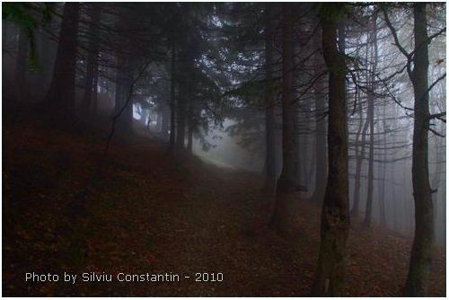 /Semimnar_foto_7/silviu_00004.jpg