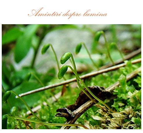 /Seminar_foto_5/mario55.jpg