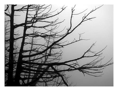 /Seminar_foto_6/laura00007.jpg
