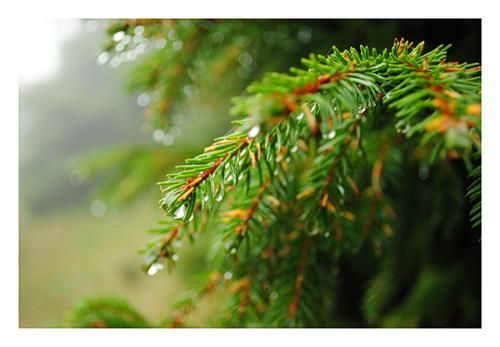 /Seminar_foto_6/marian00004.jpg