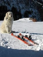 Paznic la schiuri