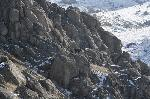 Capre, neagra si sura in Culmea Pricopanului - M_tii Macin, sub Vf. Caramalau