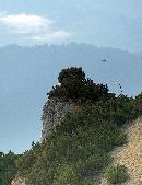 Aripi de vultur in zbor de sageata Icar si a rotit