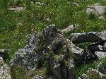 Marmota land
