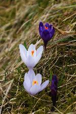 Primavara cu alaiul ei de flori