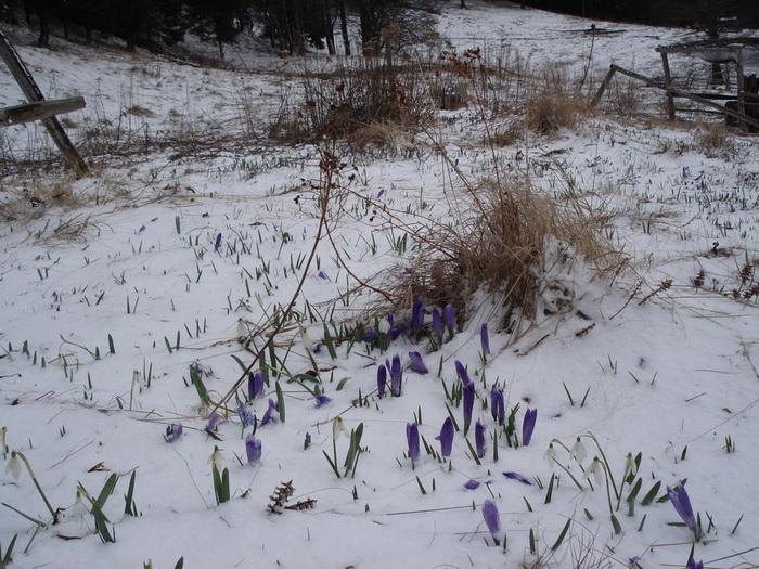 /Curbura/34._in_lupta_cu_iarna.jpg