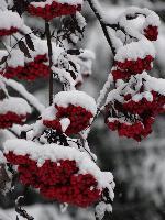 MĂŁrțișoarele iernii