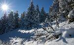 In sfarsit, a venit iarna!