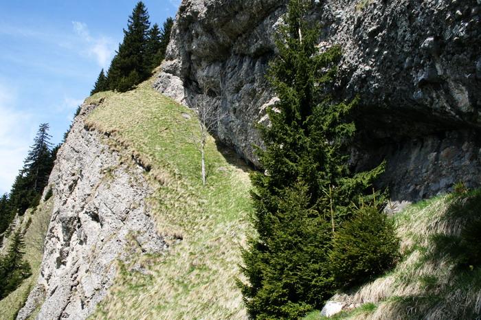 /ValeaAlpina4/img_1706-alp.jpg
