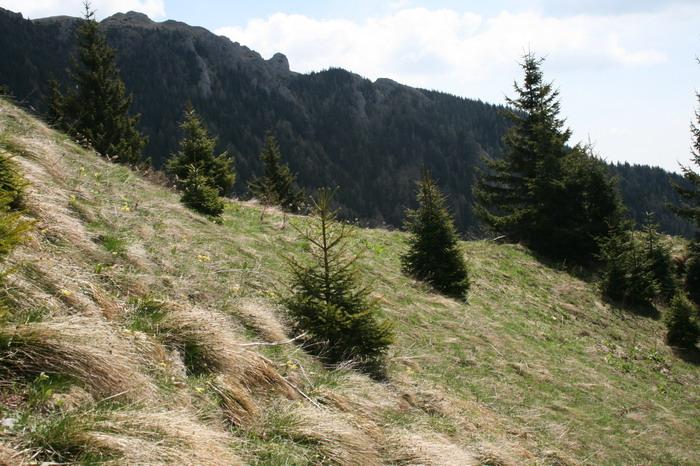 /ValeaAlpina4/img_1779-alp.jpg
