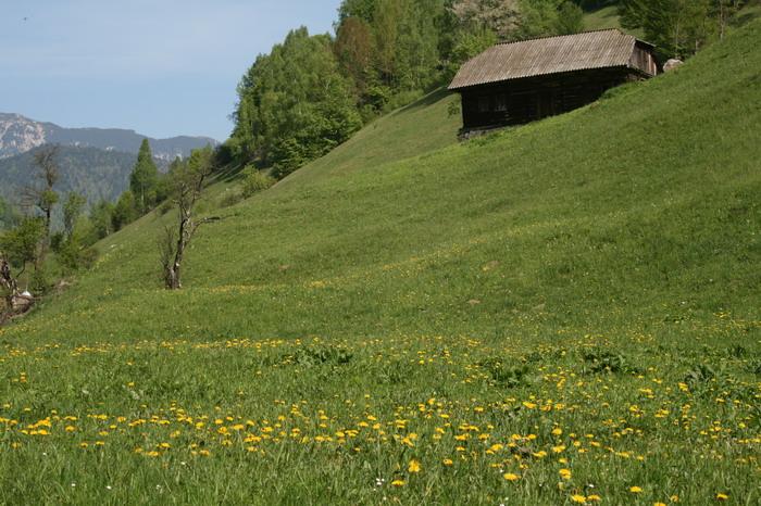 /ValeacuCalea1/img_1993-j2.jpg