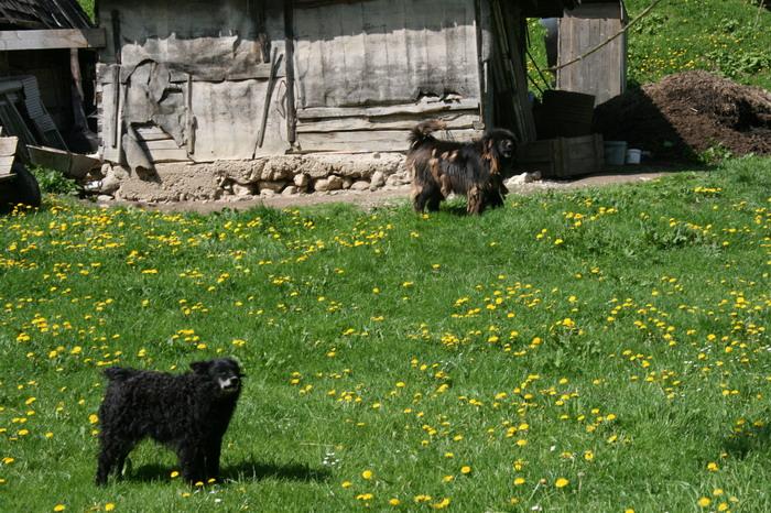 /ValeacuCalea1/img_2001-j2.jpg