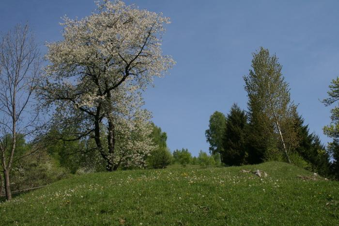 /ValeacuCalea1/img_2007-j2.jpg