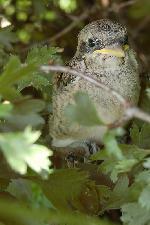 in iunie 2006 am invatat sa fiu mai atent la tufisurile pe langa care trec ...