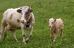O mama protectoare
