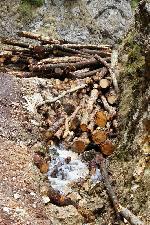 Romsilva, administrator Parc National Piatra Craiului - foto in Prapastiile Zarnestiului, arie protejata !!!  foto 2
