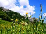 Flori, nori, cer, padure, stanci egal Munte