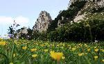 Flori si stanci in Piatra Craiului