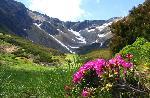 Urme de zapada pe creste si flori de Smirdar in vale