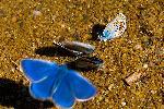 colectie albastra