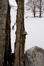 Batranul copac