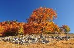 Arborele lui Moise