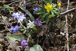 Ilustrata cu flori de camp