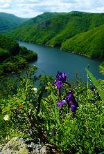 Irisi printre stanci