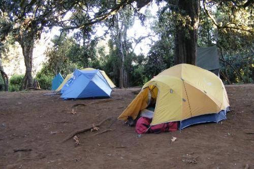 /KILIMANJARO/8._forest-big_tree_camp_2750m.jpg