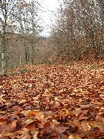 Peisaj autumnal