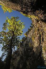 Muntii Bihor - Padis - Cetatile Ponorului (Dolina 2) 09.2010