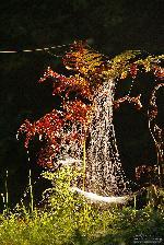Muntii Stanisoarei - Pasul Stanisoara 09.2010