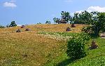 Muntii Padurea Craiului - Rosia 07.2012