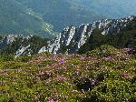 Rododendroni in Crai