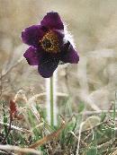 Floare pe Dealul Lempes
