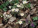 Florile Pastelui