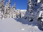Se apropie golul alpin
