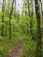 Drum prin naturĂŁ