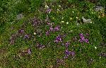 Mozaic floral