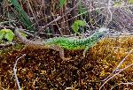 Verde, mic Âşi sprinten (2)