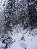 Haina de iarnĂŁ a pĂŁdurii